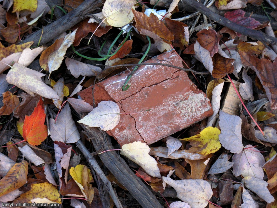 photoblog image Leaves, Branches, Brick