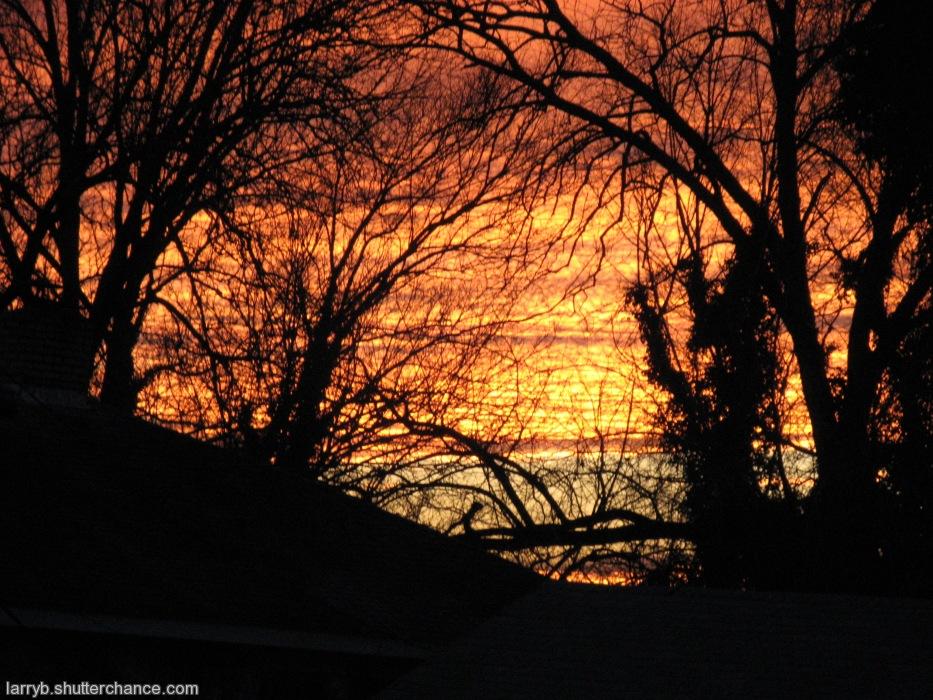 photoblog image Behind the Trees