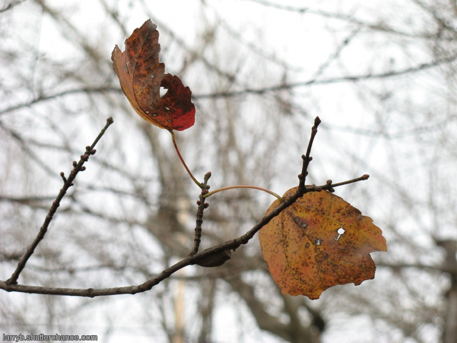 photoblog image Arrangement for the Cusp of Autumn and Winter #2