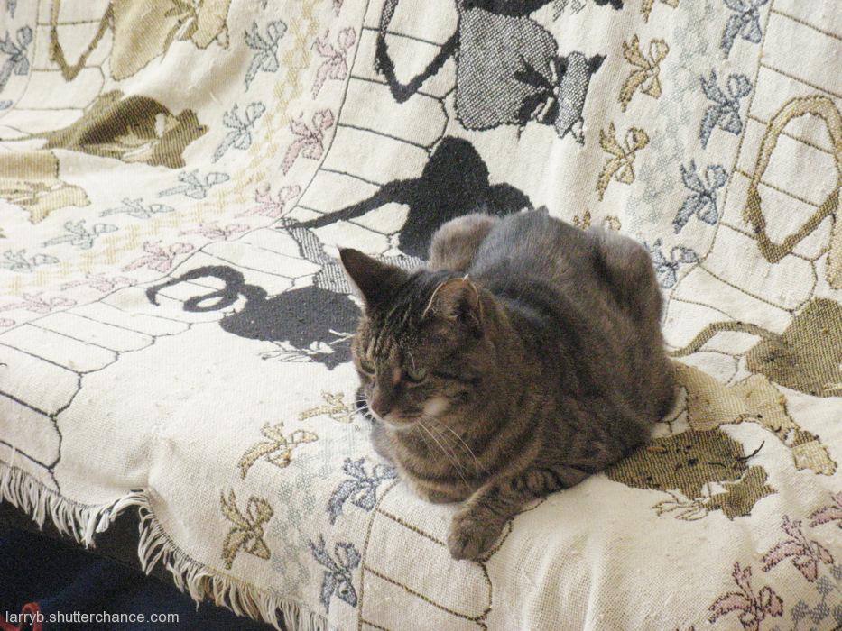 photoblog image Kai on the Couch...