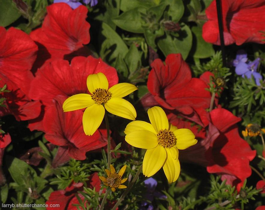photoblog image Sunny Flowers