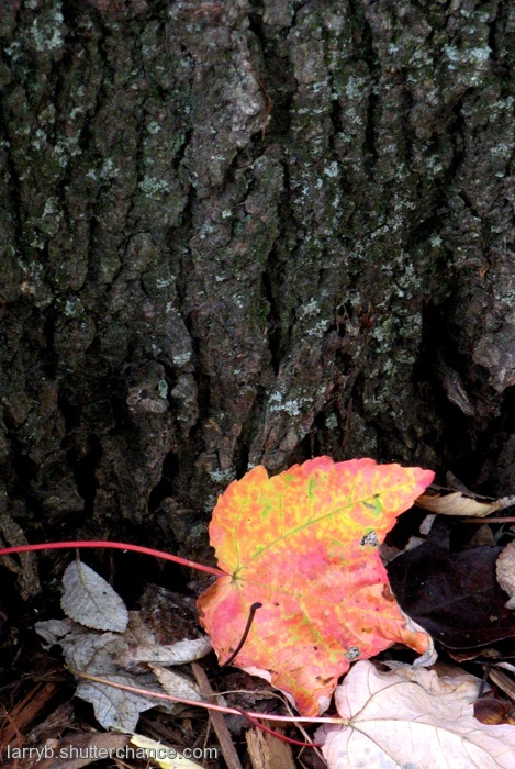 photoblog image Looking Ahead to Fall...
